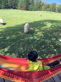 羊とお昼寝ハンモック